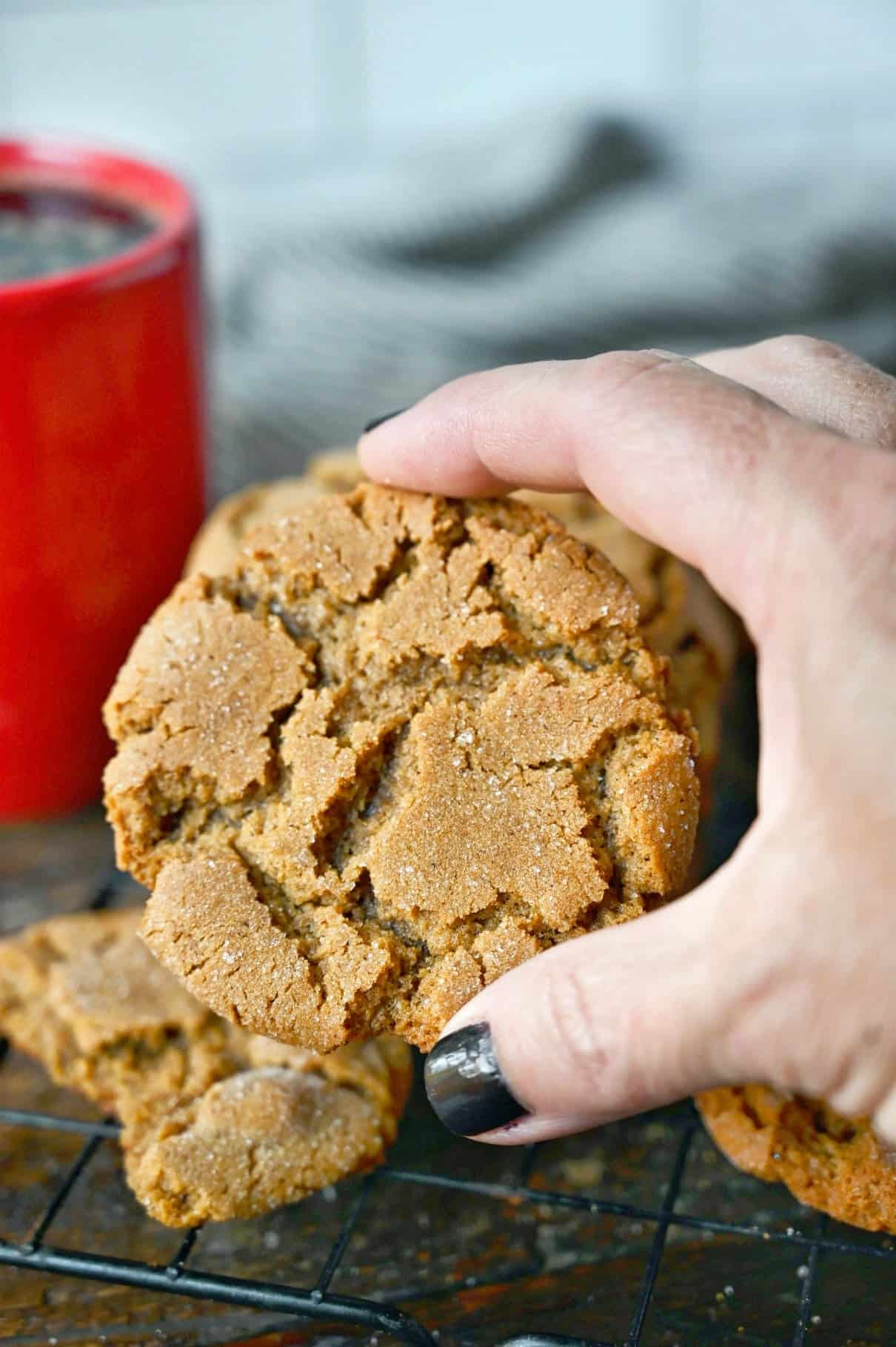 Ginger snap cookie being held in a hand.