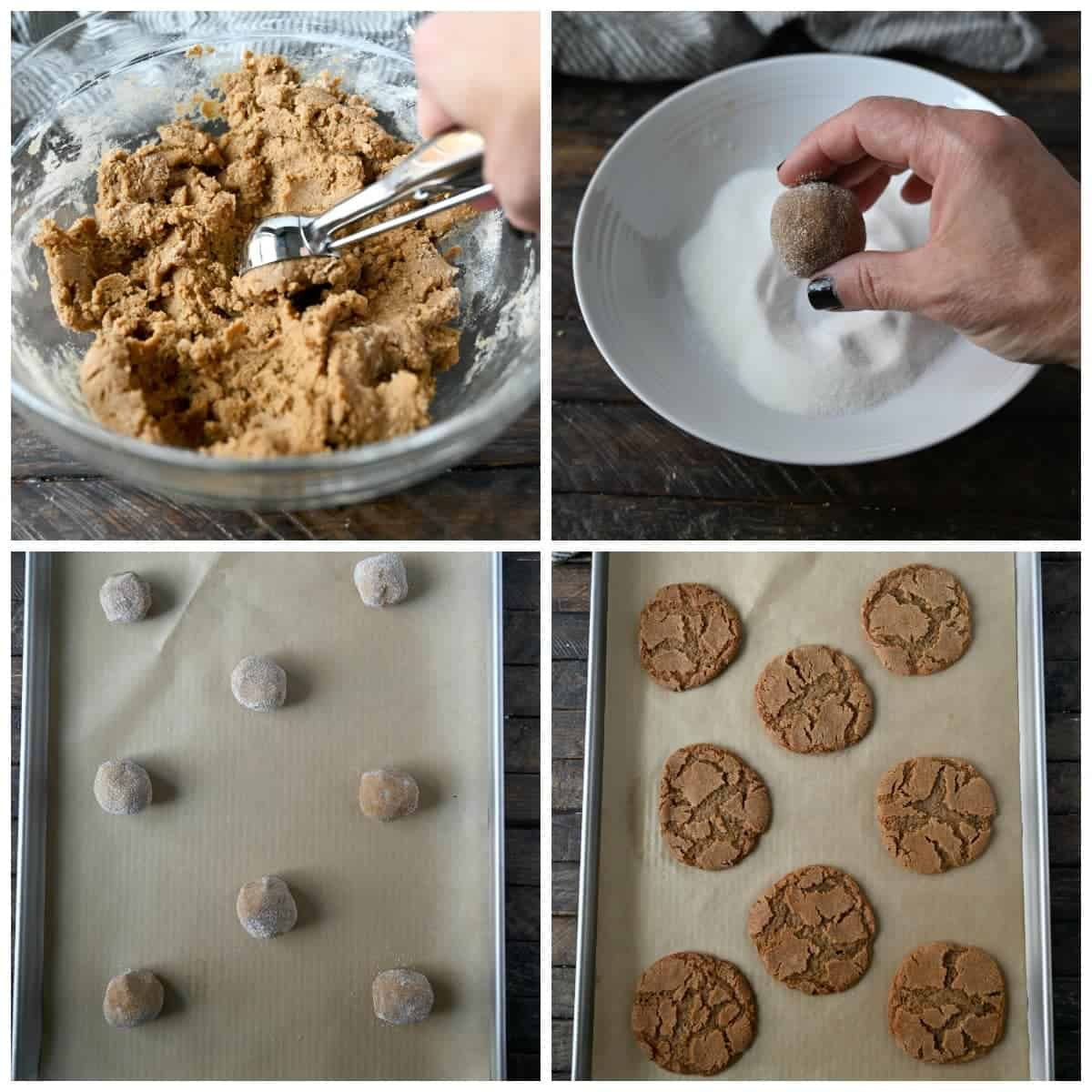 Four process photos, first one, a cookie scoop scooping out a dough ball. Second one, dough ball being rolled in granulated sugar. Third one, dough balls placed on a baking sheet covered with a piece of parchment paper. Fourth one, baked ginger snaps on a baking sheet covered with parchment paper.